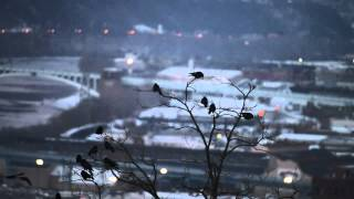download lagu Why Are There So Many Crows Above Pittsburgh's Hill gratis