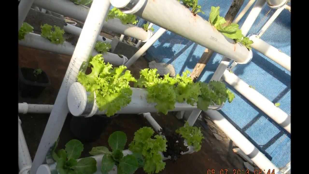 Horta Caseira em tubos de Pvc e vasos de frlores  YouTube