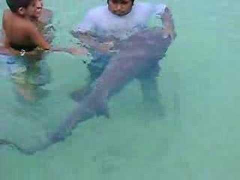 Tubarao Tiburon en Isla Mujeres Cancun