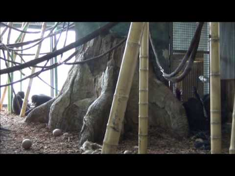 Chimpanzee Token Exchange