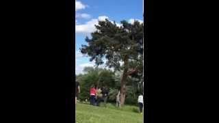 Mission impossible 4 : Frisbee on a tree