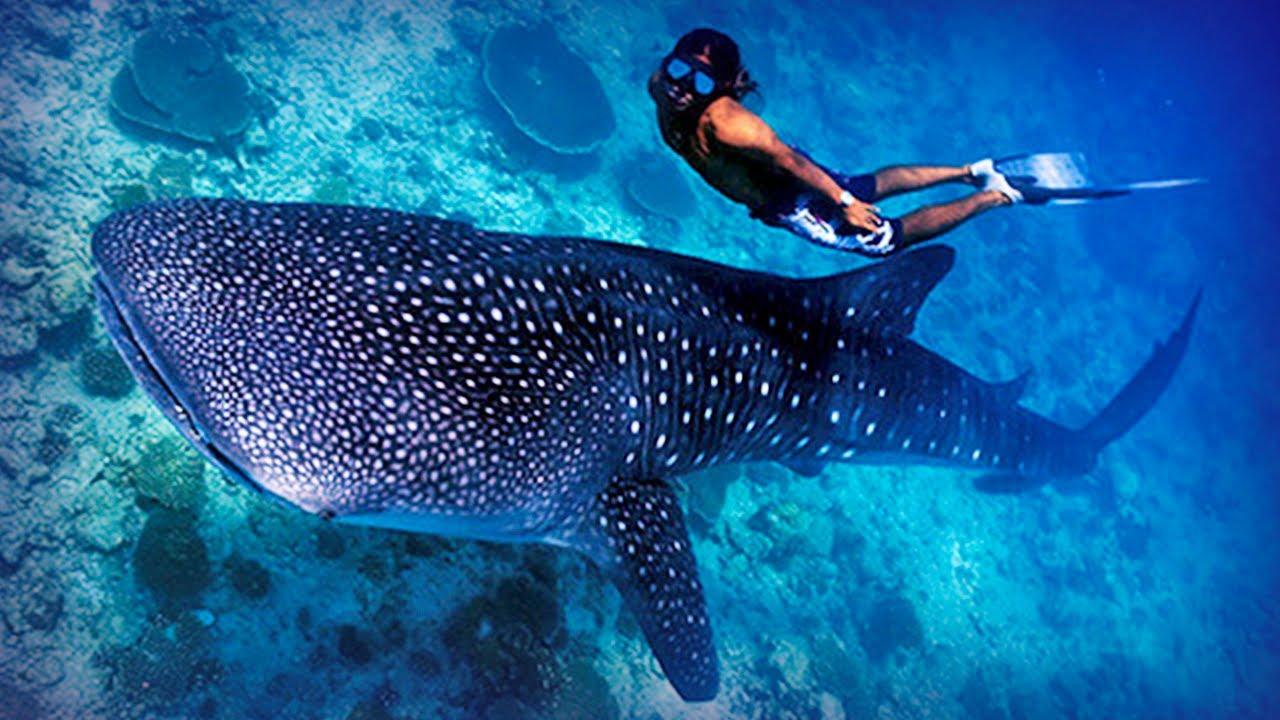 Hotel Paradise Beach Resort Maldives