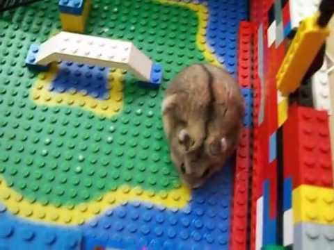 my hamsters lego house