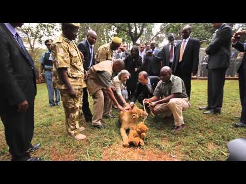 UN Secretary-General Ban Ki-moon Adopts a Lion Cub