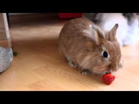 Hase klaut Erdbeere