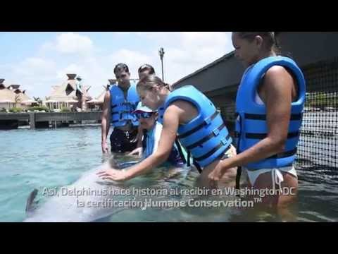 """Delphinus makes history by pioneering to receive the AHA's """"Humane Conservation"""""""