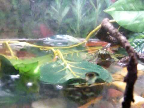 Nitrite Poisoning Of Freshwater Aquarium Fish