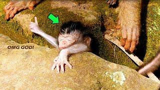 OMG, Billion Breaking Heart!, Ashley Stealing Baby Daniela & Falling Down Between The Hole Of Rock