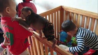 Adorable Babies Playing With Cute Doo - Monkey Doo