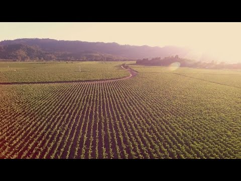 Welcome to Napa Valley 4k - DJI Phantom 3 Professional