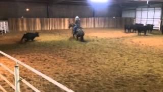 Bentley- Jared Lesh cowhorses