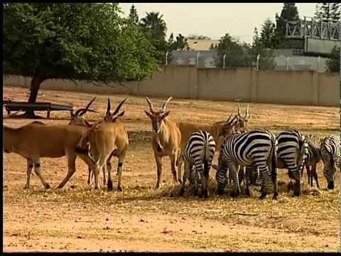Сафари-парк в Израиле