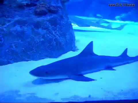 Antalya Aquarium (Turkey) - Аквариум в Анталии (Турция) 2013 - Турция 2013