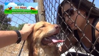 A dog rescue that will make you smile.  Please share on FB & Twitter. Mobile users - see link below