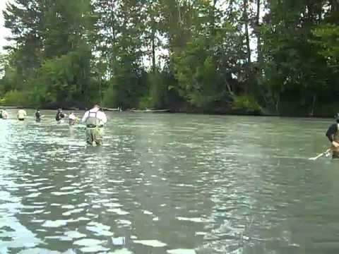 Pinks salmon fishing on the puyallup river youtube for Puyallup river fishing