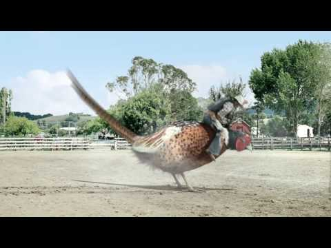 drench pheasant rodeo ad official