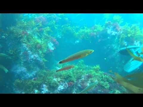 Scuba Diving - Catalina Island - Avalon Dive Park July 3rd 2013