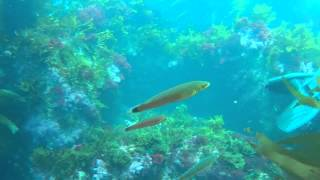 Scuba Diving - Catalina Island - Avalon Dive Park July 3rd 2013