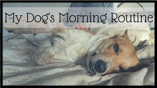 MY DOG'S MORNING ROUTINE | InRuffCompany.com