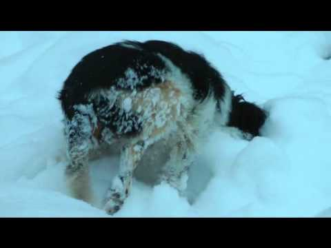 Pallina Angelo Disabile Gioca sulla Neve