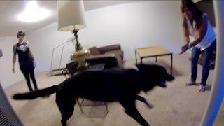 download lagu Luna The Wolfdog Remembers Mel's Mom gratis