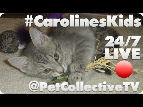 Caroline's Kids Rescue Live Cam video
