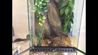 Red Eyed Tree Frog Terrarium Part 1