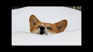 Funny Dogs and Cats Doing Funny Things Compilation 2019