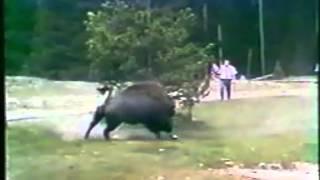 Нападение животных на людей