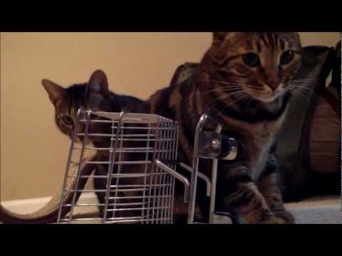 My Bengal Cats Playing with a Miniature Flea Market Shopping Cart