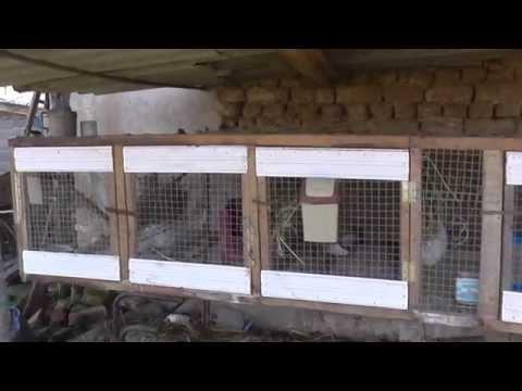 Смотреть видео как сделать клетку для кроликов своими руками