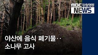R)야산에 음식 폐기물‥소나무 고사