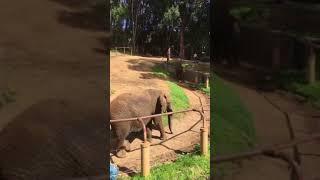 Elephant @ Oakland zoo