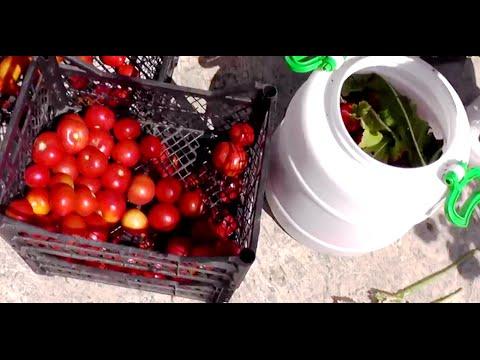 Как засолить помидоры в ведре - видео