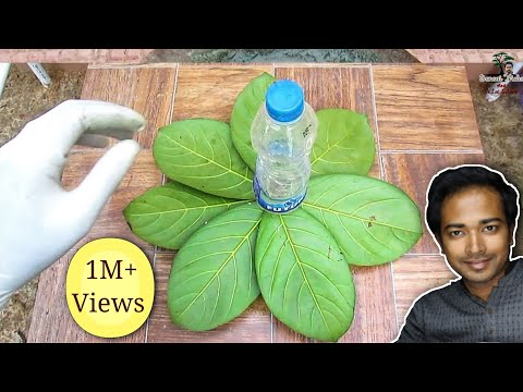 How to make wonderful cement / concrete pot - Leaf style
