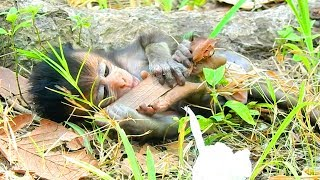 Donny Will Shock Your Heart Every Time | What Cutest baby monkeys Doing?
