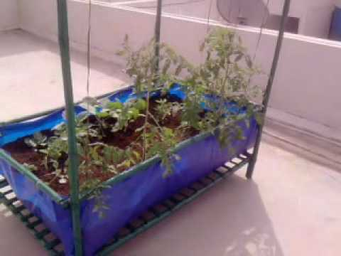 Roof top vegetable garden module in bangalore india youtube for Terrace vegetable garden india