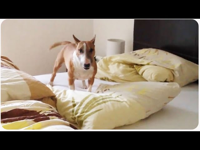 Funny Dog Goes Nuts | One Dog Circle Pit
