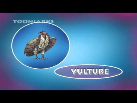 Lil Tots School Vol 1   Birds Names For Children's   Tooniarks video