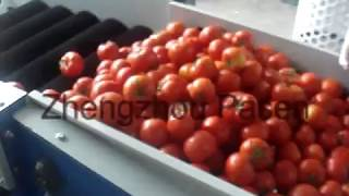 Automatic tomato sorting grading machine from kitty 0086-15515583491