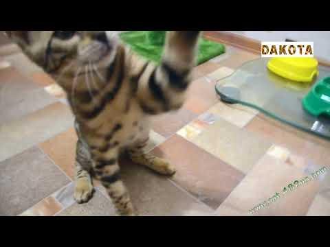 Игрушка для кота из перьев