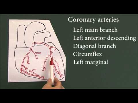 Heart disease 9, Coronary arteries