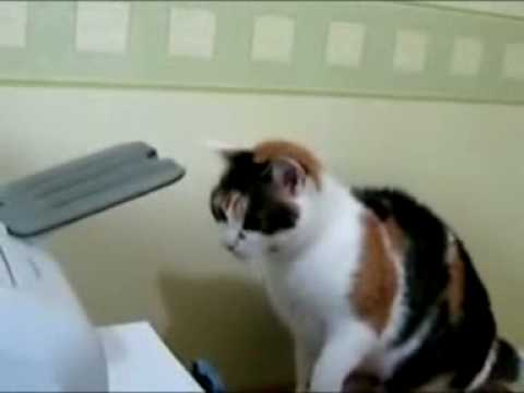 CAT and PHOTOCOPIER
