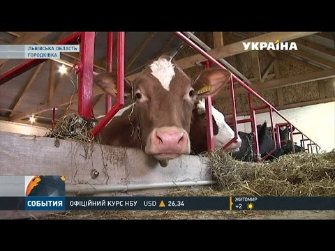 На Львівщині відновлюють сімейні молочні ферми