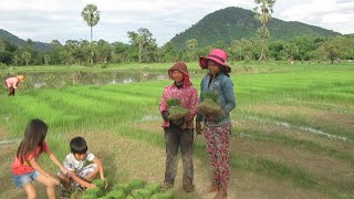 Farmers at Rice Field - Kampong Speu Province  - Travel to Phnom Penh