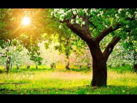 Бачурин Евгений - Дерева