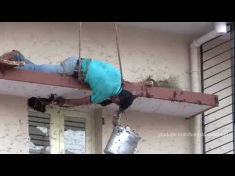 Urban Honey Hunting   Harvesting Honey Of Wild Giant Honey Bees   Apis Dorsata   In Bangalore