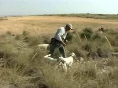 À caça com cães de parar part