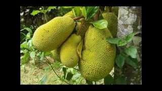 Vellaripravinte Changathi - കുട്ടിക്കാലം kuttikkalam vellaripravinte changathi song