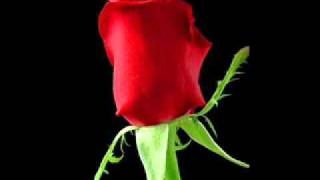 THE IMPORTANCE OF A ROSE.wmv